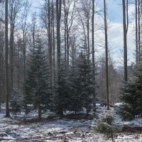 Winterlandschaft im Nationalpark Lusen